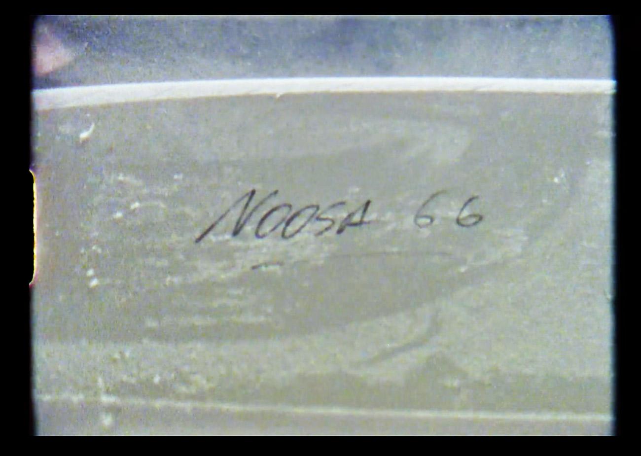 mctavish-noosa66