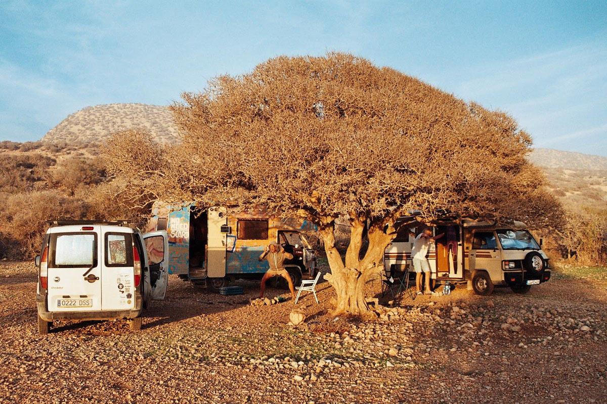 Arbol argán Marruecos